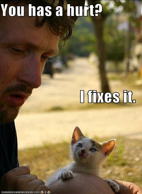 funny cat images